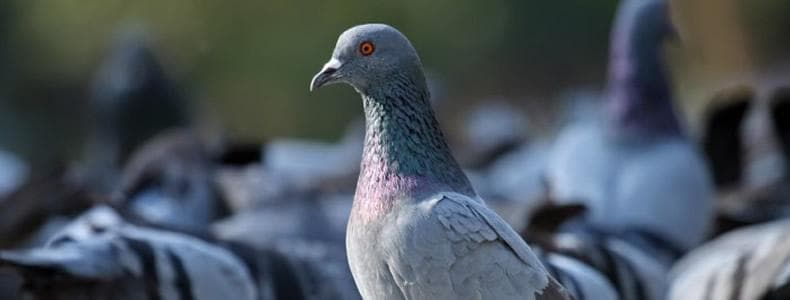 London Bird and Pigeon Control